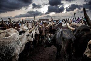 OPINION: WILL HERDSMEN PLUNGE NIGERIA INTO FOOD CRISIS?