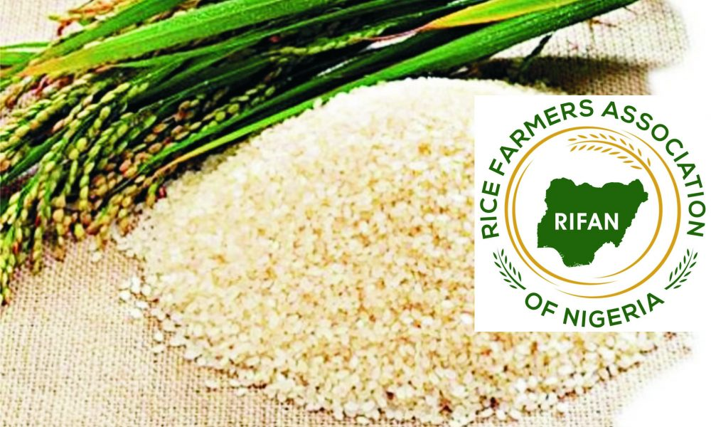 Rice Scarcity Looms Over Destruction Of Mills – :::…The Tide News Online:::…